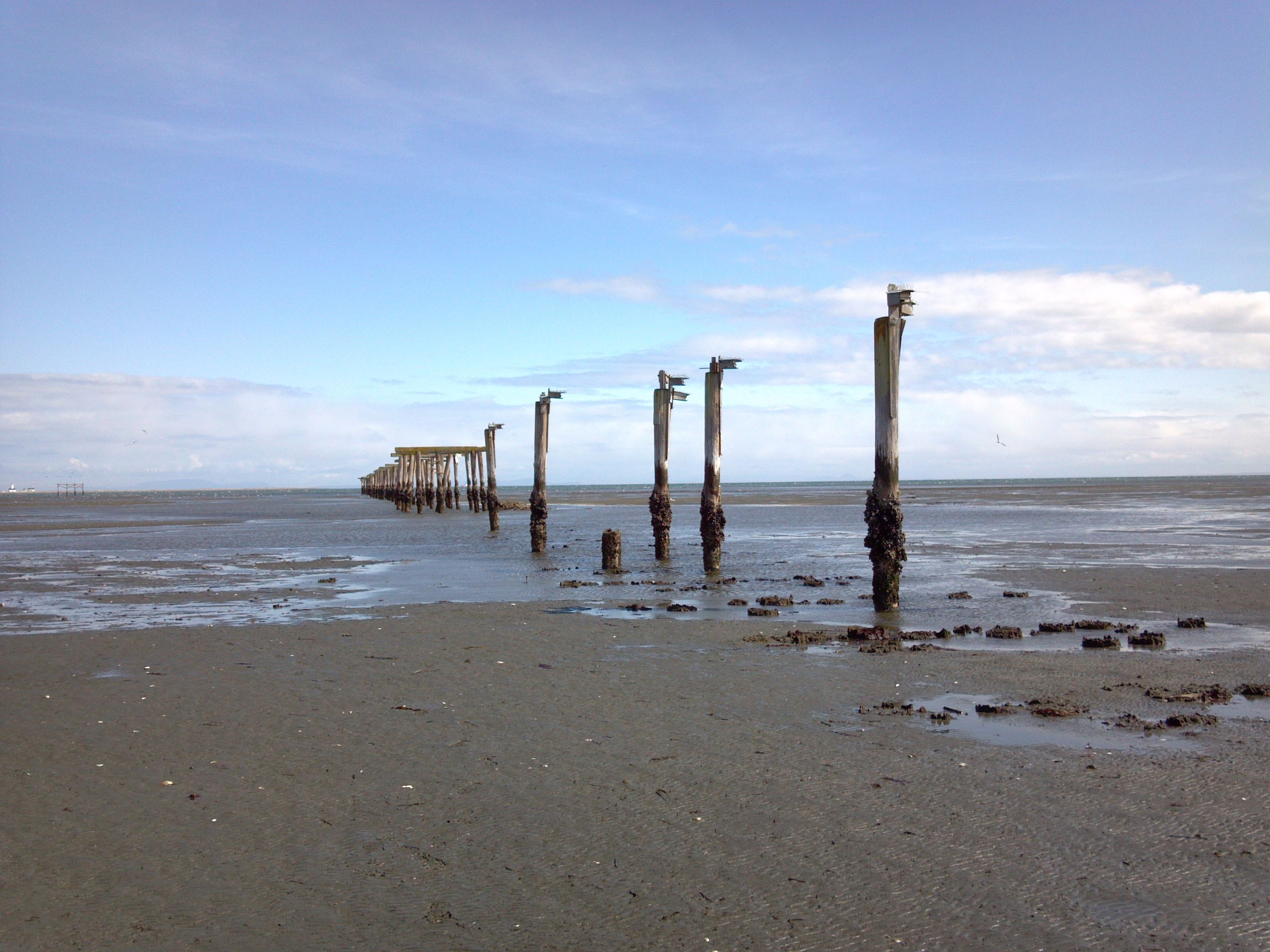 Dungeness pilings